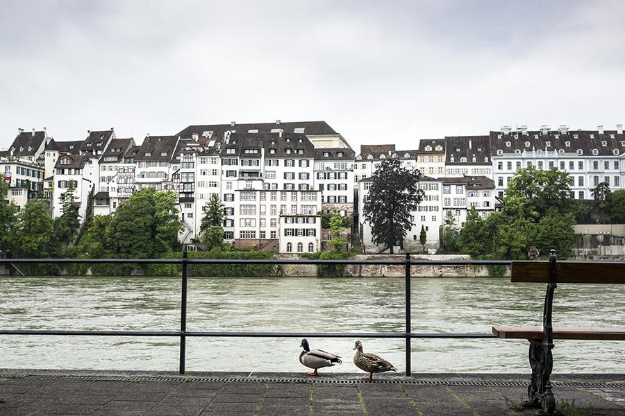 Bilder Fotos Basel Rhein