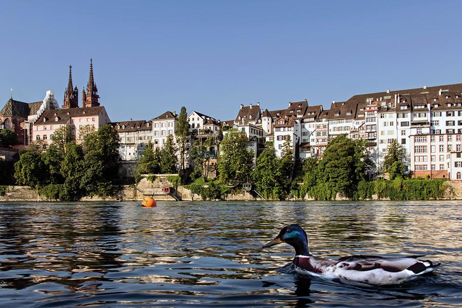 Ente, Rhein, Basel